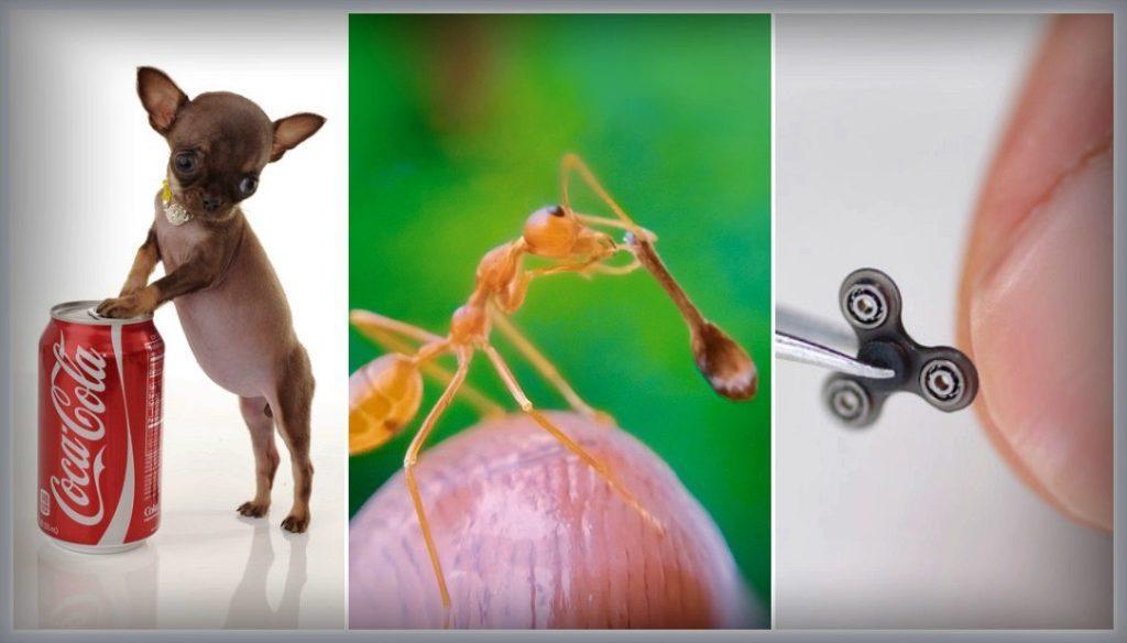 самые маленькие вещи в мире гинесса
