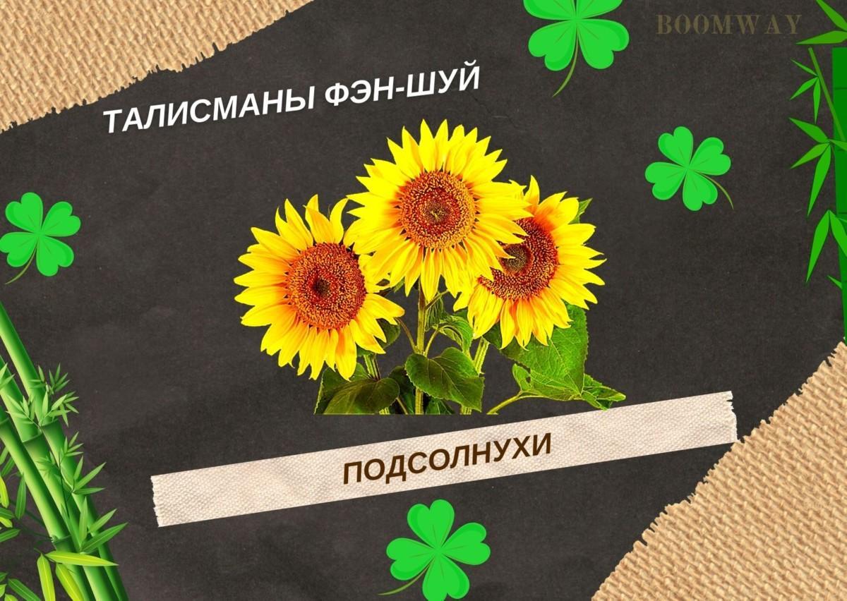 Подсолнухи - символ солнечной энергии жизни и здоровья