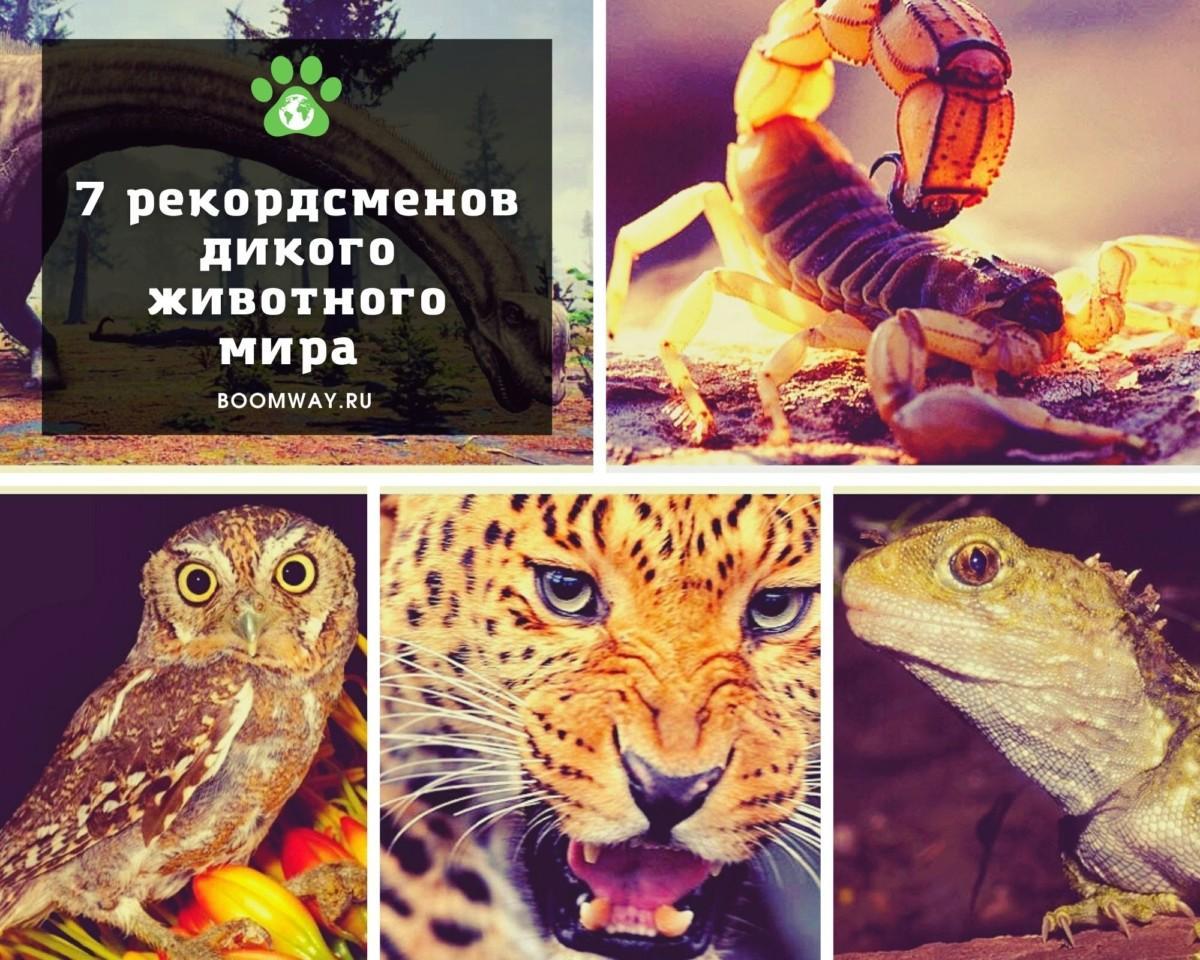 7 рекордсменов дикого животного мира.