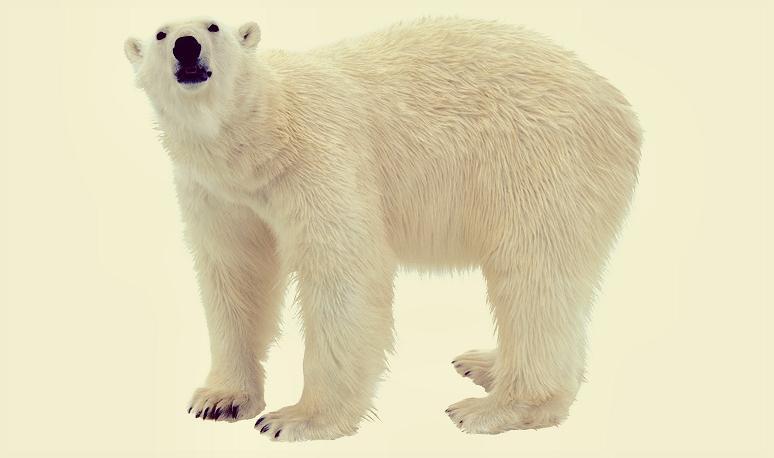 Животные-рекордсмены. Самый большой медведь.